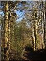 SY2697 : Bridleway to Kilmington by Derek Harper