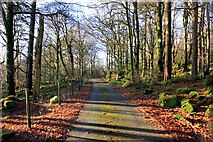 SH6737 : Path near Trawsfynydd by Jeff Buck