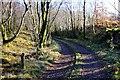 SH6737 : Path to Pandy-ddwyryd, Llyn Trawsfynydd by Jeff Buck