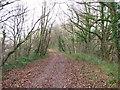 ST1286 : Taff Trail/Celtic Trail north of Nantgarw by John Light