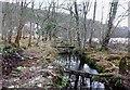 NH4061 : Stream through woodland, by Strathgarve by Craig Wallace