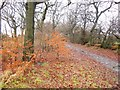 SE1934 : Beech leaves, Leeds Country Way by Derek Harper