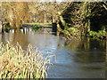 TL3852 : Harlton village pond by David Purchase