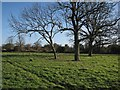 TL6355 : Towards Burrough Green by John Sutton