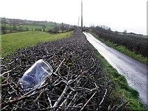 H5371 : Bottle in a hedge, Bracky by Kenneth  Allen