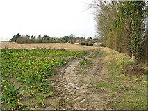 TG3311 : View towards Hemblington Corner by Evelyn Simak