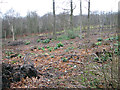 TG4901 : Clearing in Belton Wood by Evelyn Simak