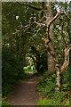 TQ2353 : Bridleway near Mogador by Ian Capper