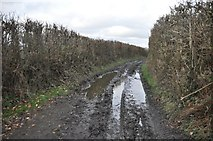 SS9823 : Mid Devon : Muddy Track by Lewis Clarke
