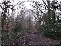 TQ2372 : Inner Park Ride, Wimbledon Common by David Anstiss