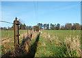 SU7182 : Fancy Fence Post by Des Blenkinsopp