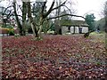 H4673 : Fallen leaves, Mullaghmore by Kenneth  Allen