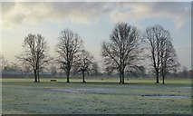 SK4833 : Trees in West Park by David Lally