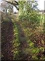 NZ8306 : Esk Valley Walk near Dorsley Bank by Derek Harper