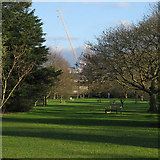 TL4557 : In the Botanic Garden by John Sutton
