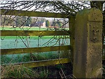 NZ1465 : River Tyne Tide Stone & Heddon Haugh Farm by Andrew Curtis