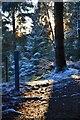 NT2841 : January sunlight, Glentress by Jim Barton