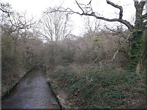 TQ2170 : Beverley Brook, Wimbledon Common by David Anstiss