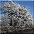 TL5056 : A hard frost in January by John Sutton