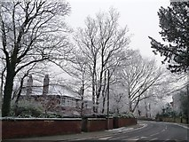 SE3321 : Hoar frost on the trees, mid-afternoon [2] by Christine Johnstone