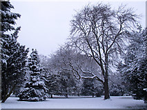 TQ3978 : Snow-laden trees in the Pleasaunce by Stephen Craven
