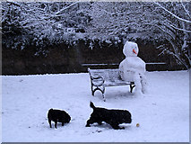 TQ3978 : One snowman and his dogs by Stephen Craven