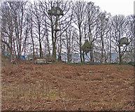 SK2563 : Heathland encampment at Endcliffe Quarry by Trevor Littlewood