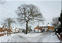 SO9096 : Winter in  Buckingham Road, Penn, Wolverhampton by Roger  Kidd