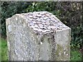 NT5633 : Coins on the Rhymer's Stone by Jim Barton