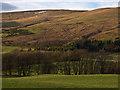 NN9900 : Farmland near Pool of Muckhart by William Starkey