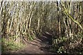SD7313 : Footpath by Bradshaw Brook by Philip Platt