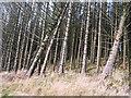 H5081 : Gortin Glen Forest by Richard Webb