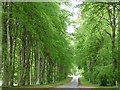 NC8401 : The avenue to Dunrobin Castle by Robin Drayton