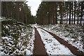 NH9322 : Track in Deishar Wood by Dorothy Carse