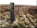 NS5782 : Boundary fence on Owsen Hill by wrobison