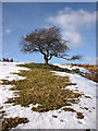 SD5894 : Hawthorn tree and snow, Lambrigg Park by Karl and Ali