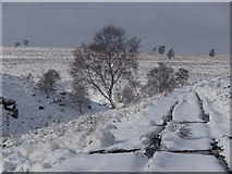 SK2775 : Track by Bar Brook in winter conditions by Andrew Hill