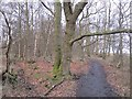 NS9194 : Path, Cowpark Wood by Richard Webb