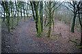 SD7019 : Path in Grainings Wood by Bill Boaden