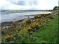 NH5862 : Cromarty Firth and Bridge by Robin Drayton