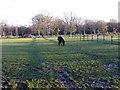 SY8685 : Horse Paddocks at Baylea Farm by Nigel Mykura