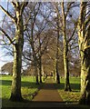 SX8670 : Tree-lined path, Forde Park by Derek Harper