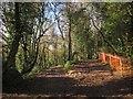 SX8767 : Path junction, Kerswell Down by Derek Harper