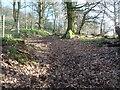 SO5312 : Woodland path by Jeremy Bolwell
