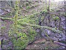 SD9163 : Moss and ferns near Janet's Foss by John Illingworth