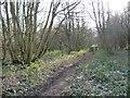 SE5301 : Woodland path, Sprotbrough Plantation by Christine Johnstone