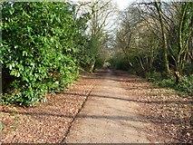 SS9712 : Tiverton : Railway Line Path by Lewis Clarke