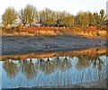 ST3190 : Trees beside the River Usk, Newport by Robin Drayton