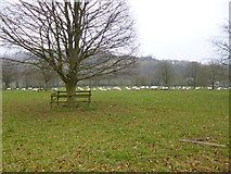 ST7701 : Bingham's Melcombe, sheep grazing by Mike Faherty