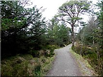 H5776 : Lough-side path round Loughmacrory Lough by Kenneth  Allen
